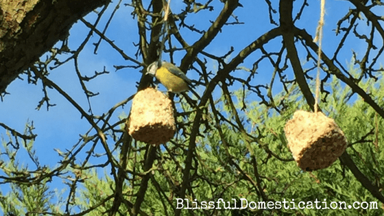 Home Made Fat Balls for Birds