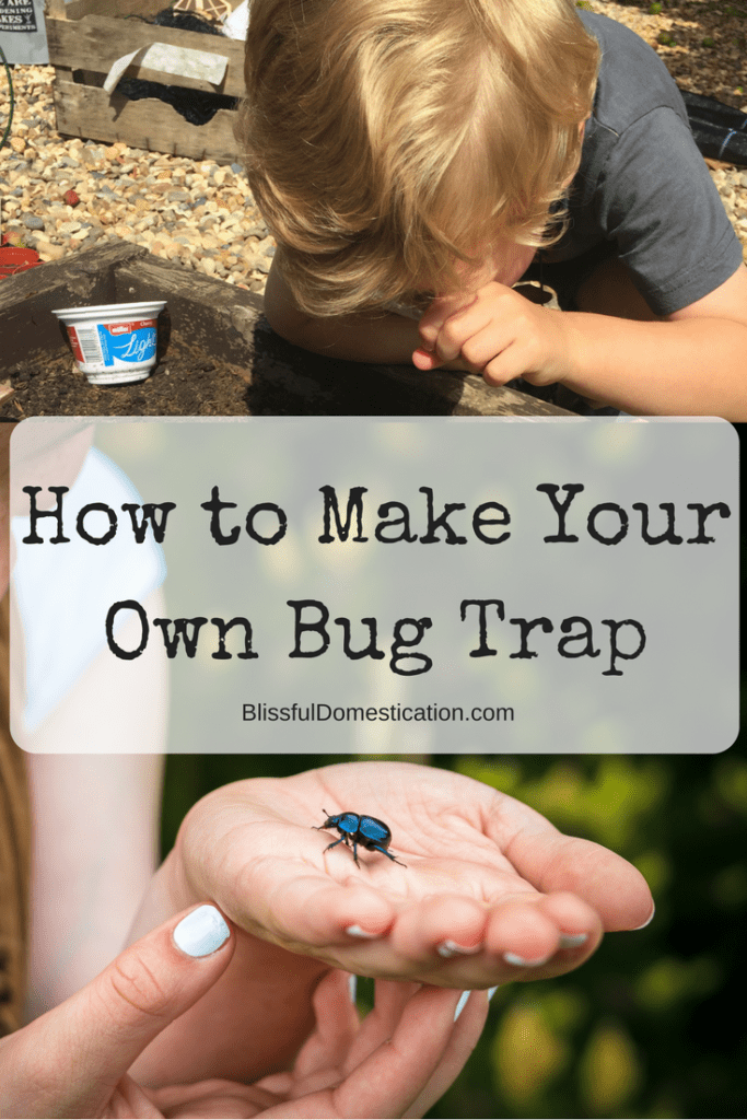 How to Make Your Own Bug Trap