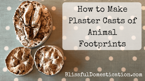 We're Going On a Footprint Hunt!- How to Make Plaster Casts of Animal Footprints