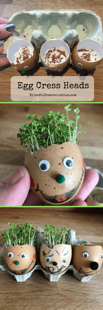How to Grow Your Own Cress Egg Heads | Blissful Domestication