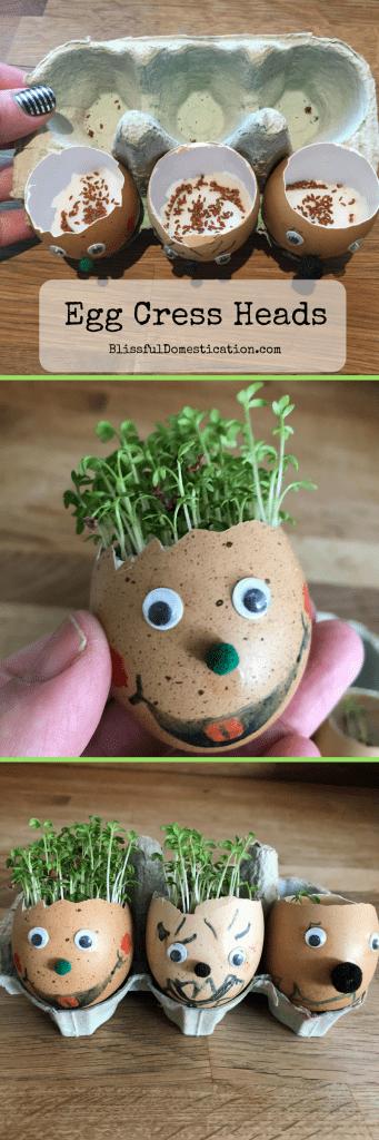 Cress Egg Heads