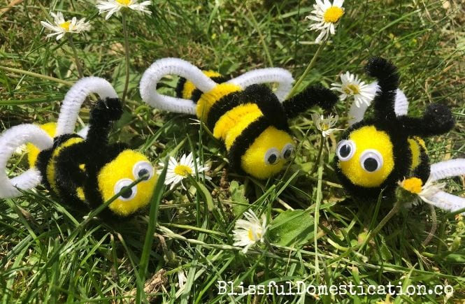Fetaured Image for How to Make a Pipe cleaner Bee