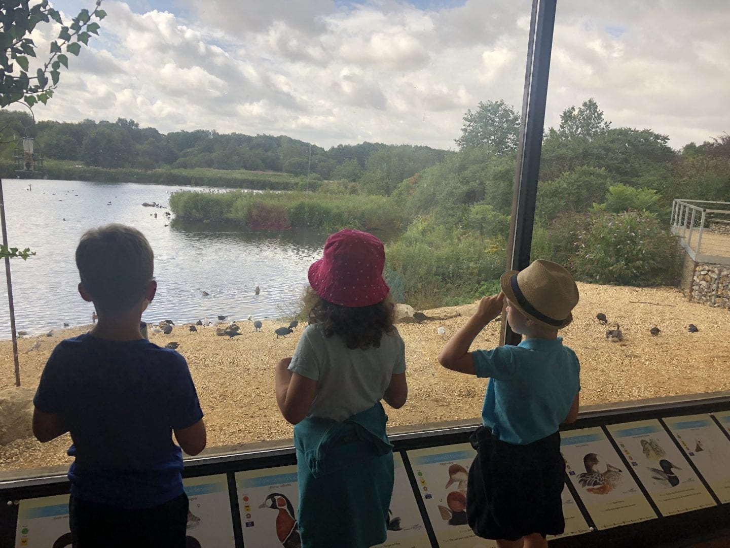 3 chidren looking out to the Mill Pond from the viewing gallery at Pensthorpe Natural Park