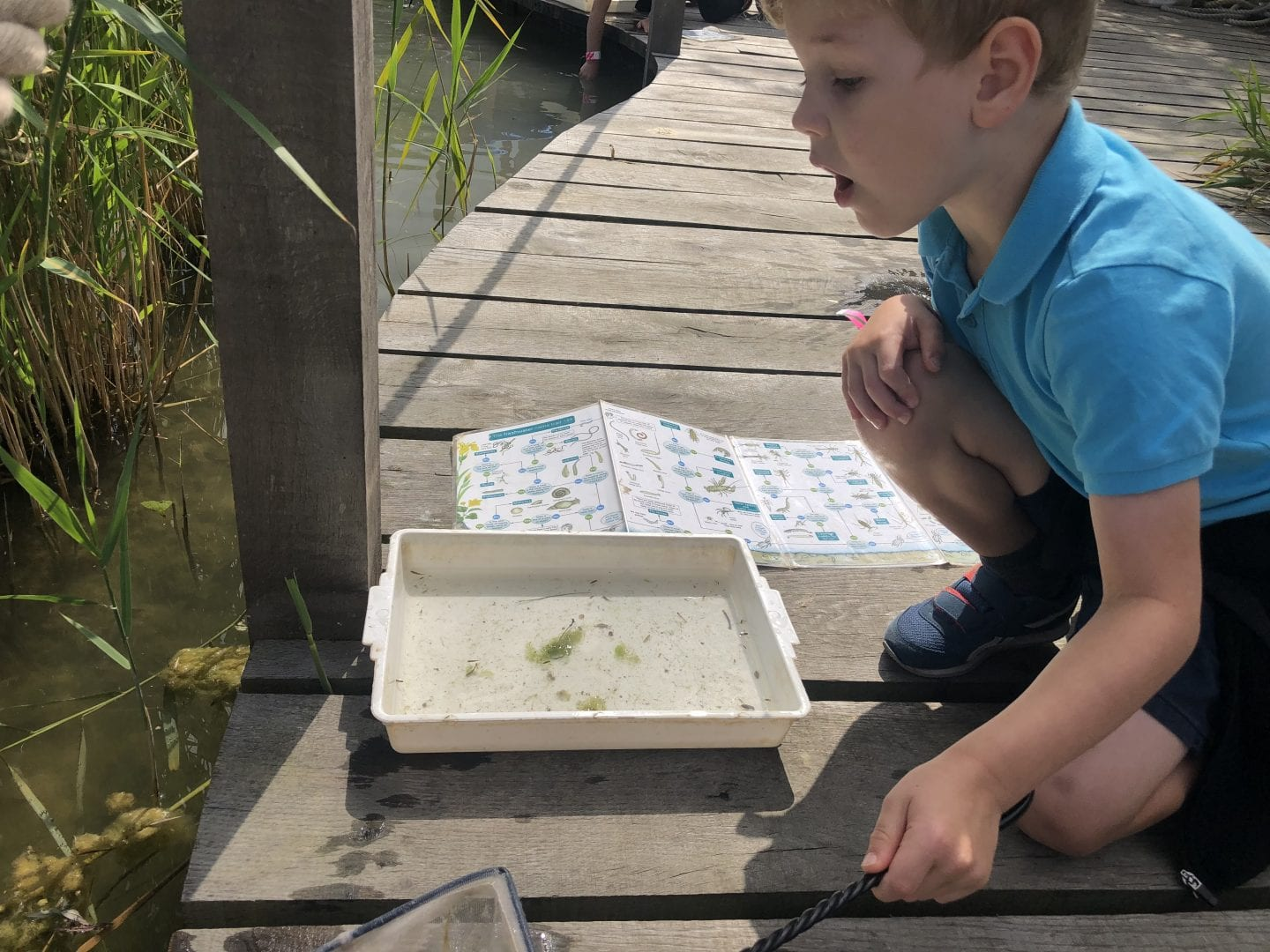 Oliver pond dipping